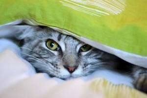 Tina - Plaid en patchwork folklore pour mon canapé, merci Tina