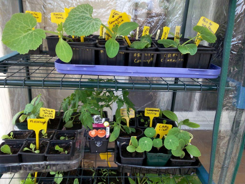 Plants de légumes et fleurs en mini-serre