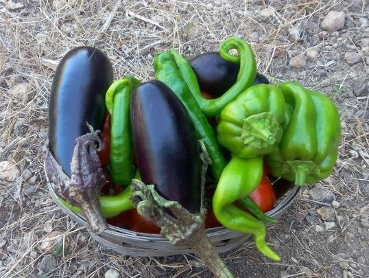 Des récoltes mitigées au potager 2017