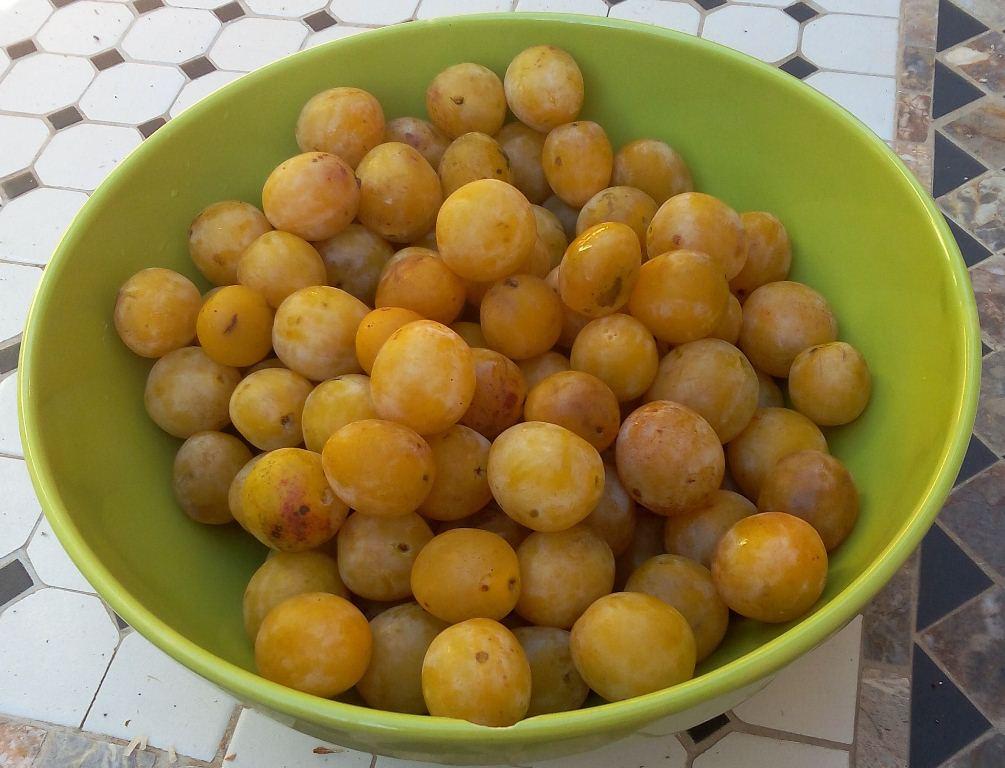 Un kilo de mirabelles mûres et dorées à souhait - une confiture de mirabelles vraiment délicieuse